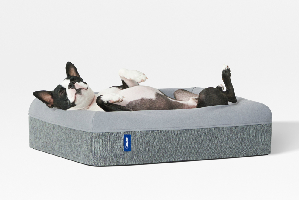 casper dog mattress dreaming u201c