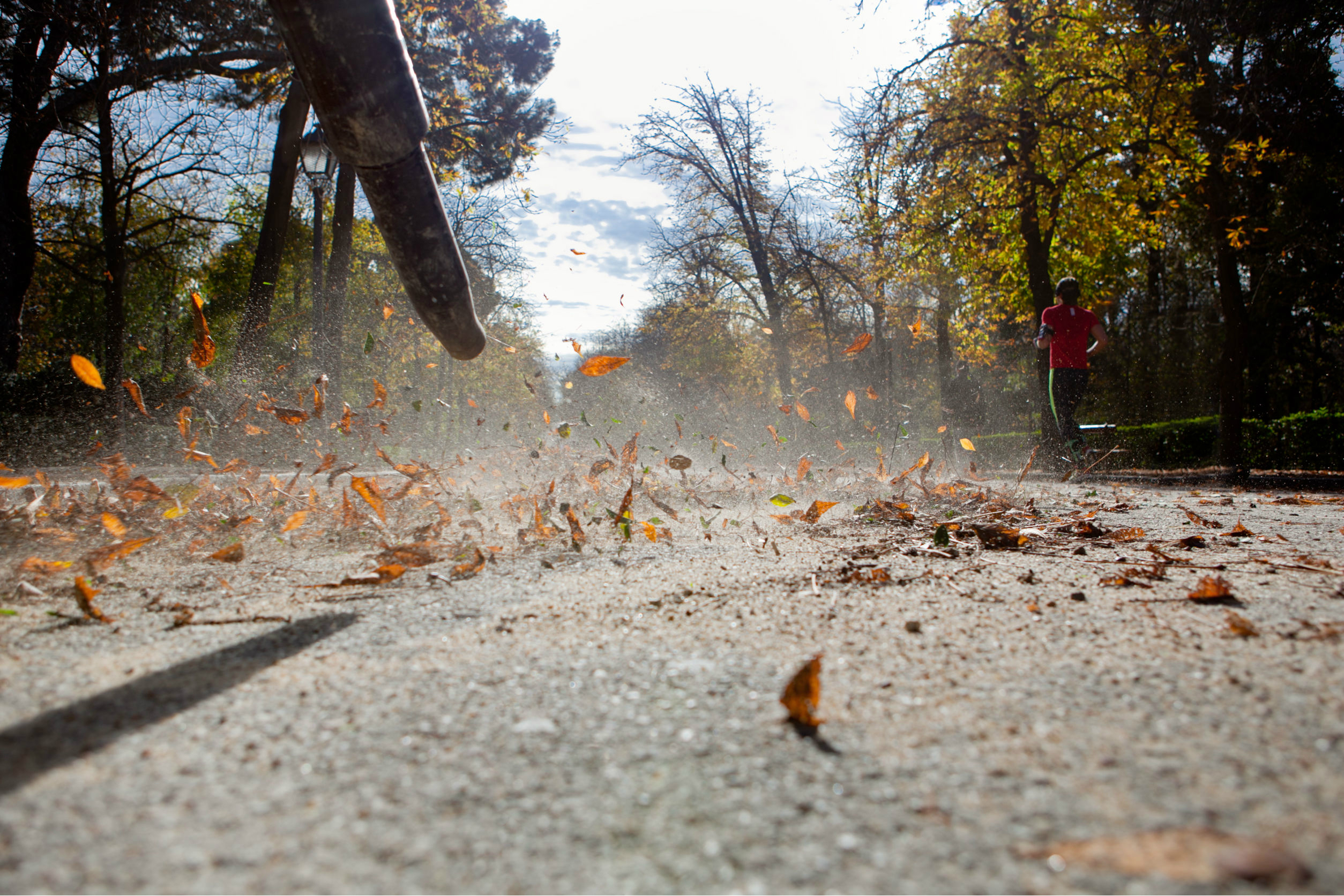 The 5 Best Leaf Blowers of