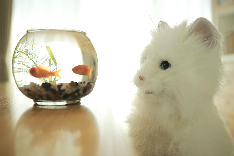 the 15 weirdest japanese toys digital trends