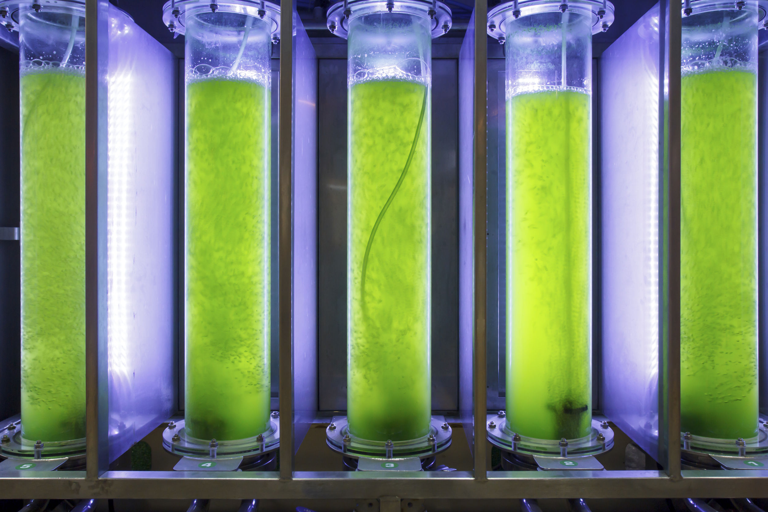 Phd thesis on algae production for bioenergy