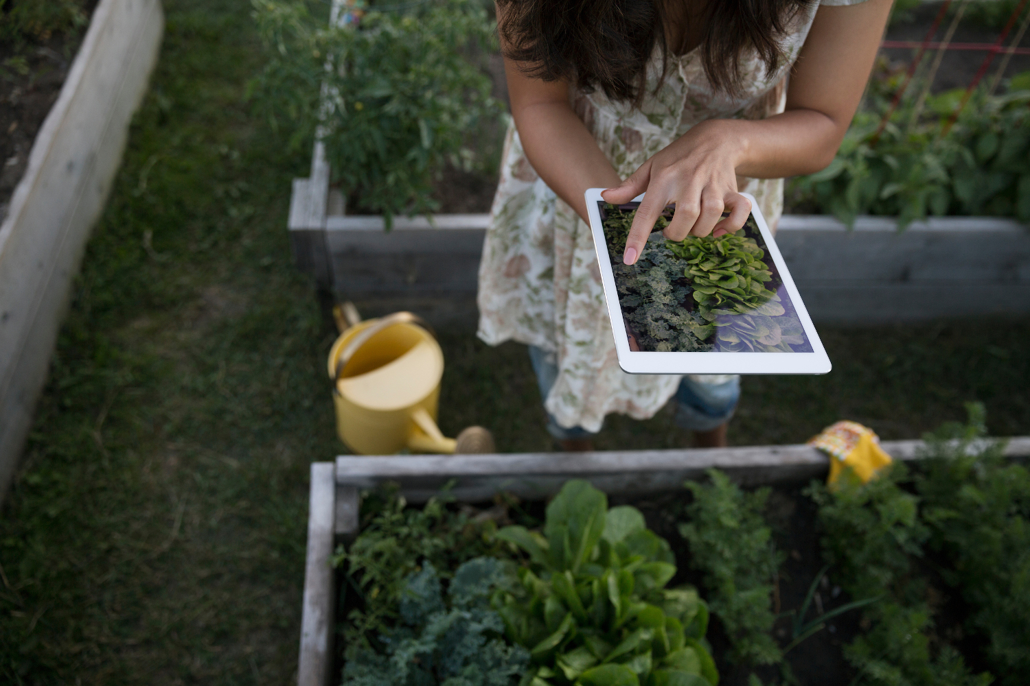 The 5 Best Gardening Apps for Android and iOS | Digital Trends