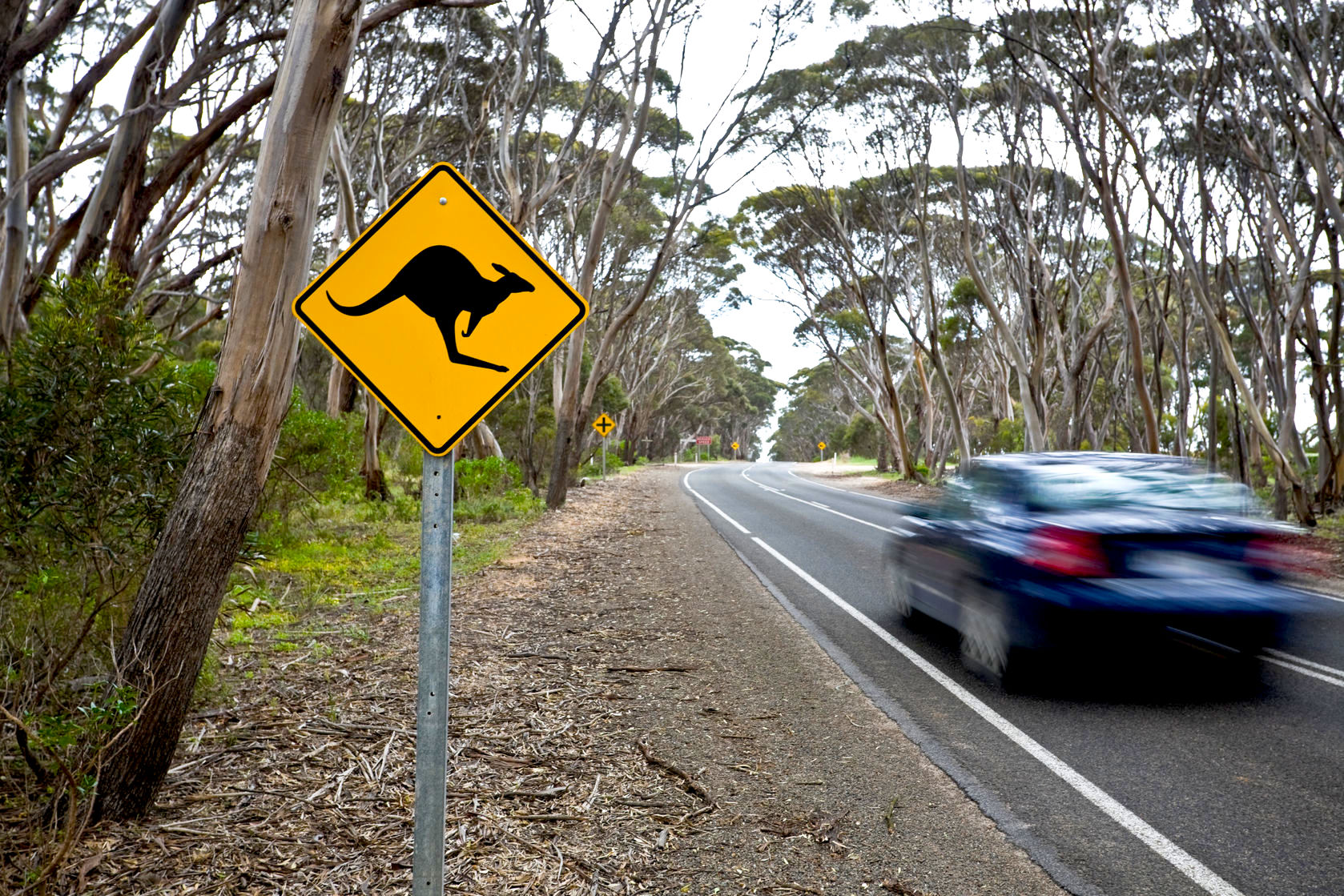 volvo u0027s driverless car engineers face a kangaroo conundrum