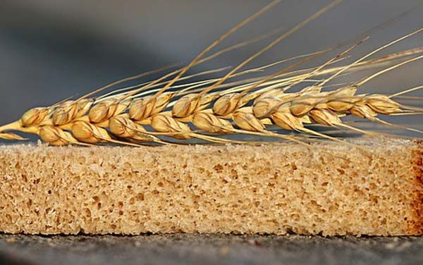 Debunking the Gluten Myth