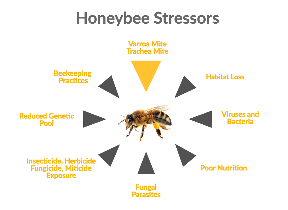 effects on honey bees research paper We also found that the negative effects of these pesticides are sometimes greater when the pesticides occur in combinations within the hive  honey bees and other.