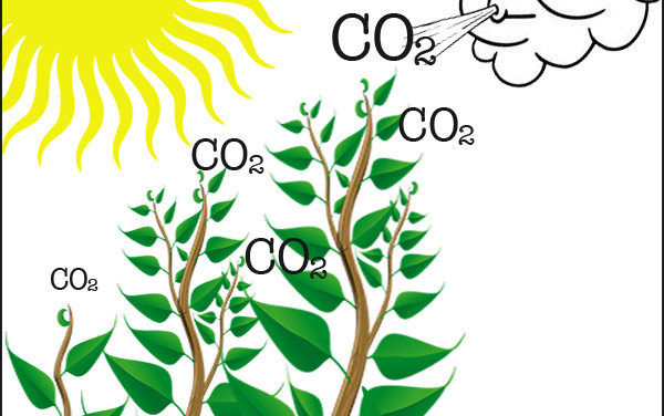 The Bright Side of Carbon Dioxide