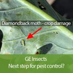 Genetic Engineering: The Future Insecticide?