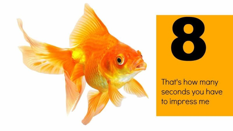 godfish (1)