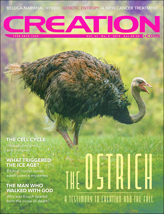 Creation Magazine Volume 41 Issue 4 Cover