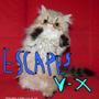 ESCAPES X