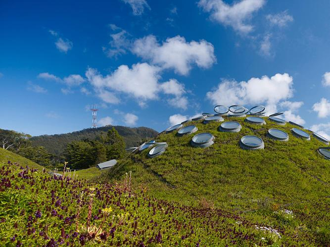 Explore the Living Roof with Naturalists