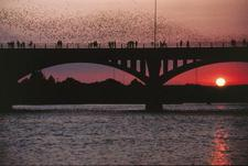 Congress-avenue-bridge_bats_austin_poster
