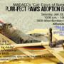 Cat Days of Summer-Purr-fect Paws Adoption Event
