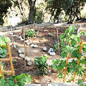 Community Garden at the Southwest Museum - Southwest Museum of the American Indian