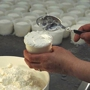  Basic Cheesemaking