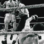 "Sport Film Series: ""Raging Bull"""