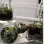 Glass Jar Terrariums: Friday Date Night Edition