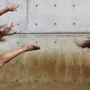  The Wasatch Collective Dancers Present Aggregate
