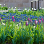 The City of Chicago Presents: Tour of the Lurie Garden