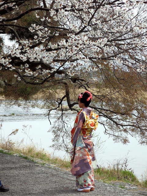 Spring blossoms in Arashiyama