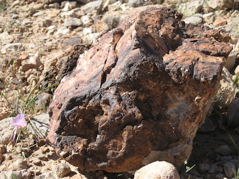 Head-sized rock in Grand Canyon