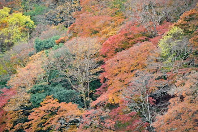 Fall foliage on the Hozu River