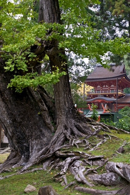 Kasuga Taisha shrine through the trees
