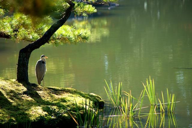 Kinkakuji pond