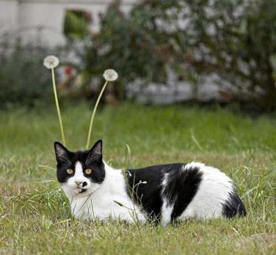 Martian cat