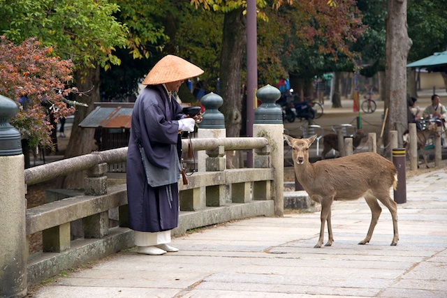 Monk and Deer, on the way to Toudaiji in Nara