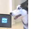 iPad meets singing dog