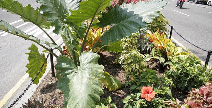 Tropical_plant_sale