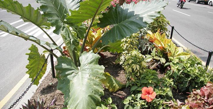 Tropical_plant_sale