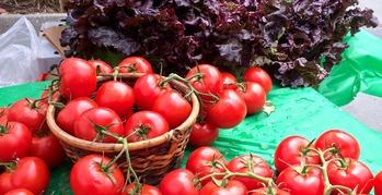 Tomatoes.redleaf2
