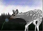 Drawing: Deer Mr.Colour