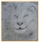 Drawing: Lion