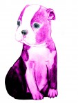 Drawing: Pink Boston