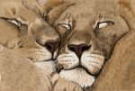 Drawing: Lion Love
