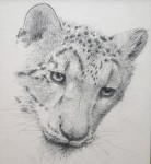 Drawing: Snow Leopard - 2