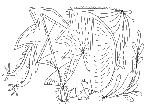 Drawing: Drawing