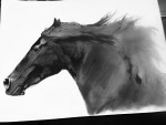 Drawing: Arabian Black Stallion - Graphite
