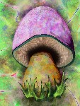 Drawing: Shroom