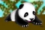 Drawing: Baby Panda