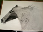 Drawing: Stallion in Motion Version 1