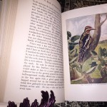 A-Book-of-Natural-History-Thomas-B-Aldrich-Vol-XIV-of-Young-Folks-Library-291522834795-7