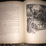 Home-Spun-Yarns-First-Edition-1888-Victorian-Childrens-Magazine-Illustrated-291322697271-11