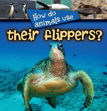 Normal_flippers_08