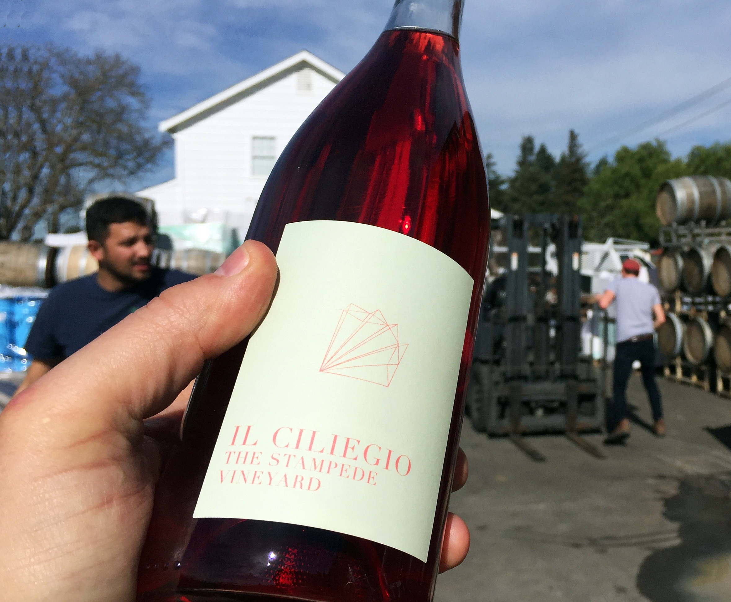 2015 Il Ciliegio Stampede Vineyard - the scholium project