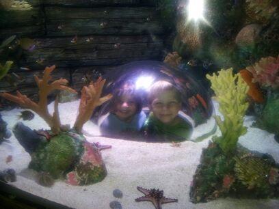 Missouri Public Aquarium : Pin Tunnel Life on Pinterest