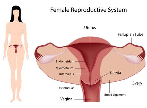 Houston Endometriosis Treatment