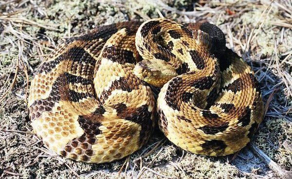 Where can i buy a snake near ridgewood nj? PLEASE?